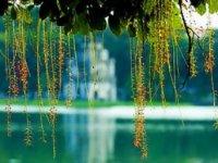 Trang chủ - Đón Giáng sinh & Năm mới tại [Hà Nội - Ninh Bình - Bắc Ninh - Hạ Long]