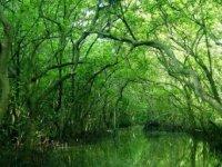 Trang chủ - Du lịch đường sông [Rừng ngập mặn Cần Giờ - Vàm Sát]